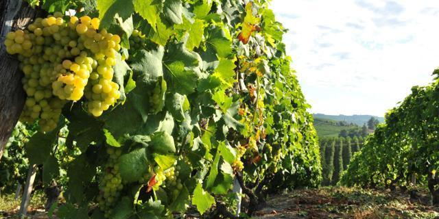 Gibellina, dal cuore della Sicilia arriva il Vigneto del Mediterraneo