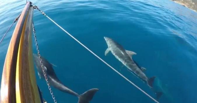 delfini ottobre isola d'elba