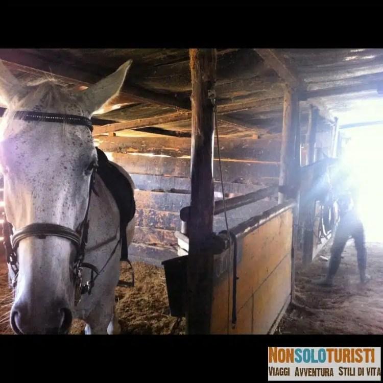 A Cavallo in Maremma Toscana