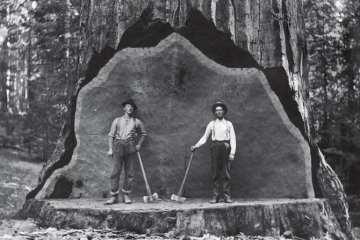 Una sequoia gigante viene usata come fondale per le fotografie (foto d'archivio del National Park Service)