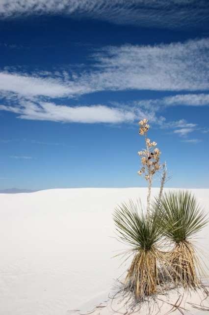White Sands in New Mexico