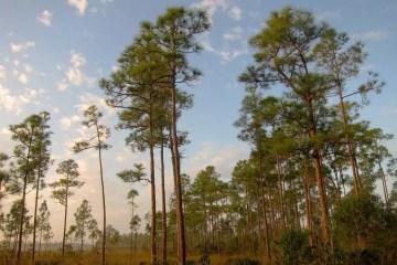 Miami_Everglades National Park_Miguel Vieira
