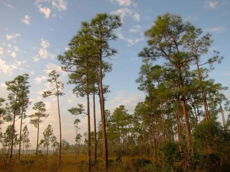 Everglades National Park - Miami, USA