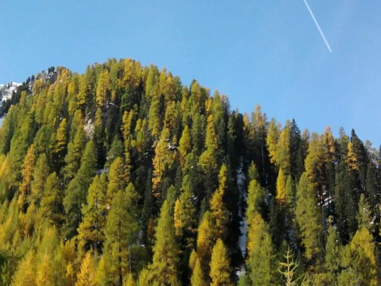 Bosco di latifoglie in autunno - Italy