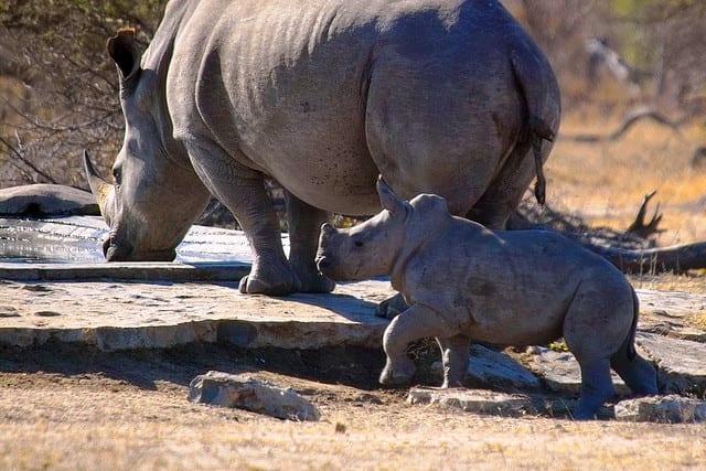 Rinoceronti - Sudafrica