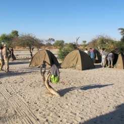 Safari Australe Ovest - Botswana
