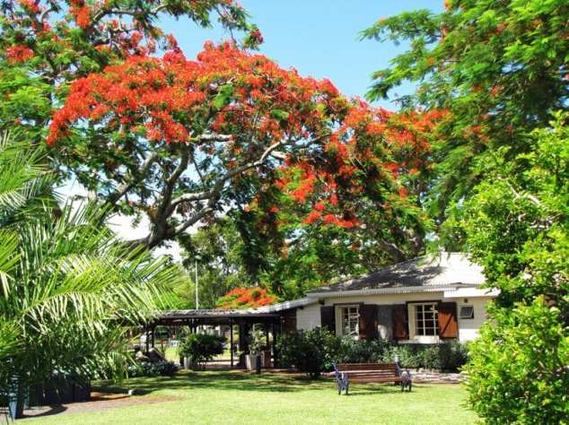 Flamboyant, Mauritius