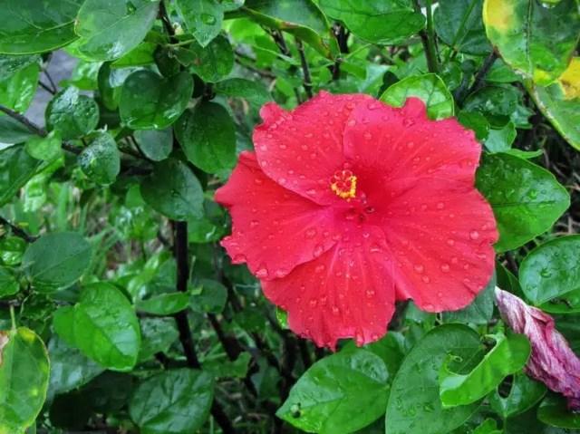 Ibisco - Mauritius