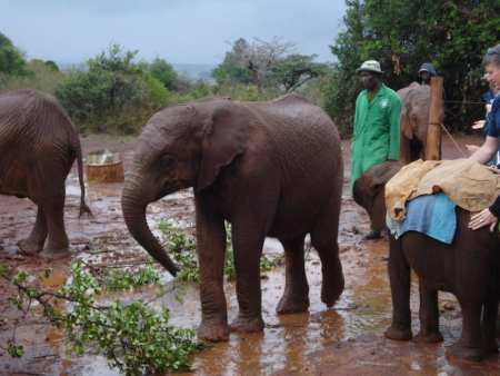 David Sheldrick Wildlife Trust - Kenya
