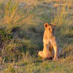 Masai Mara - Kenya