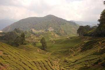 Cameron Highlands - Malesia