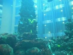 AquaDom - Berlino, Germania
