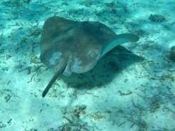 Snorkeling - Huahine, Polinesia Francese