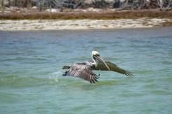 Isole Keys, USA