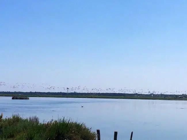 Isola degli Spinaroni - Ravenna, Italia