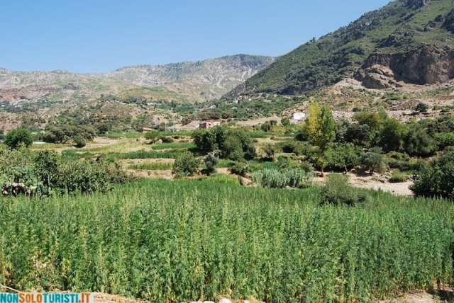 Cannabis - Chefchaouen, Marocco