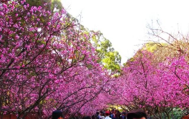 Giardini botanici di Auburn - Sydney, Australia