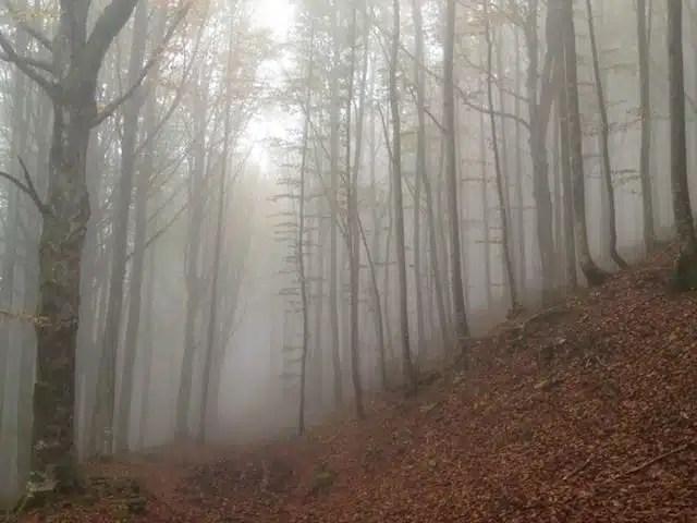 Foresta della Lama - Appennino romagnolo, Italia