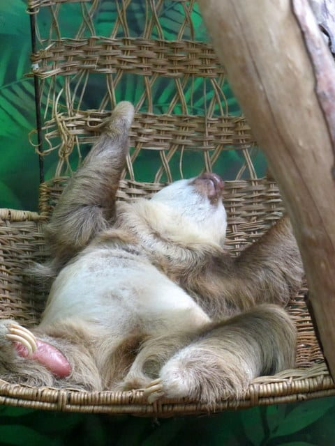 Santuario dei bradipi - Costa Rica