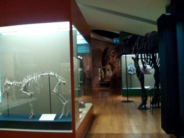Museo di Storia Naturale - Basilea, Svizzera