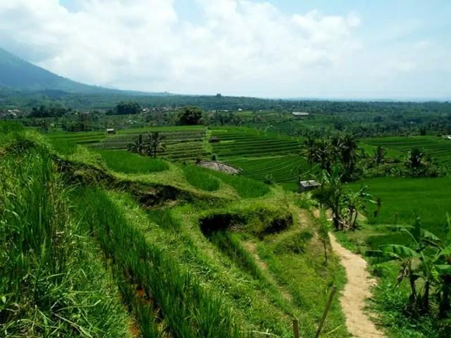Jatiluwh - Bali, Indonesia