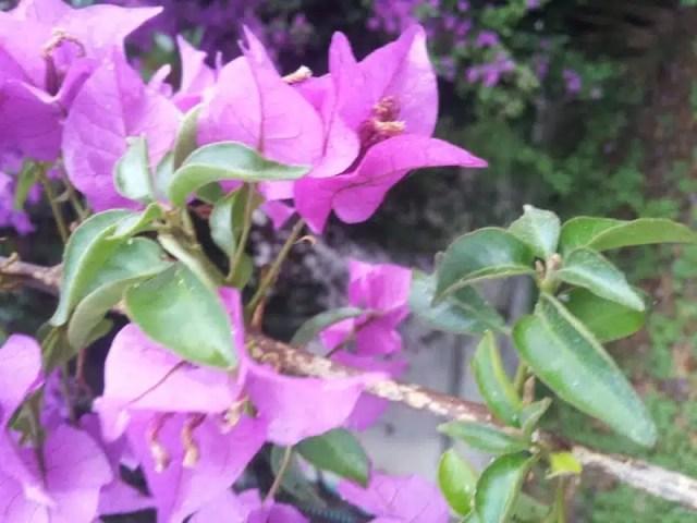 Sicilia fiori di inizio estate