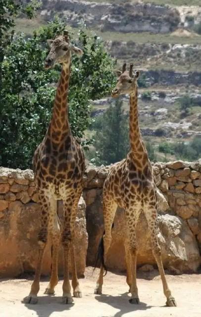Israele Biblical Zoo
