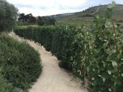 Sandeman, Quinta do Seixo - Portogallo