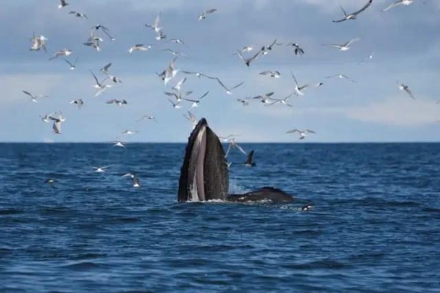Islanda, Reykjavik e whale watching