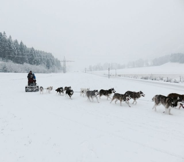 Corsa in slitta, Angerberg - Tirolo, Austria