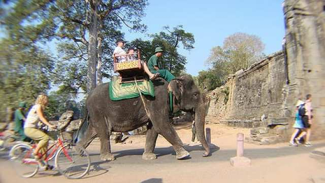 Maltrattamento animali - Angkor Wat, Cambogia
