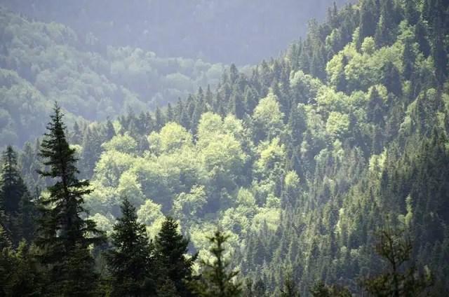 I boschi della valle dell'Aspropotamos