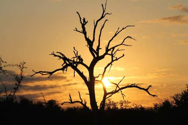 Kruger National Park - Sudafrica