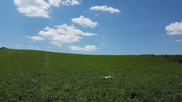 fattoria didattica Biò-panorama