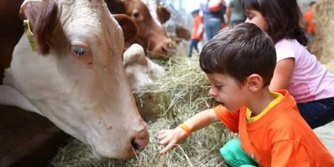 alpecimbra_evento_FestivaldelGioco_fattoria-