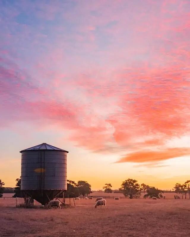 fattoria australia