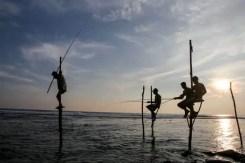 Pescatori sui trampoli