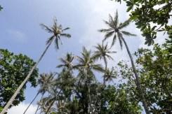 Le palme del Dickwella Resort