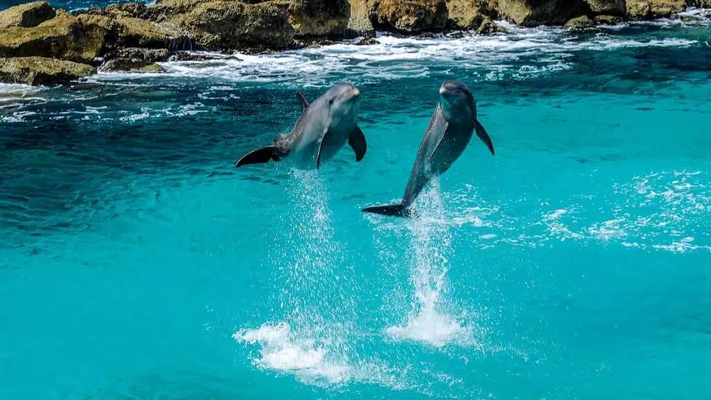 Nuotare con i delfini a mauritius video
