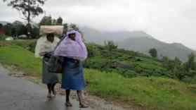 3 Munnar piantagioni di tè (10)