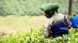 3 Munnar piantagioni di tè (5)