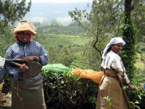 3 Munnar piantagioni di tè (8)