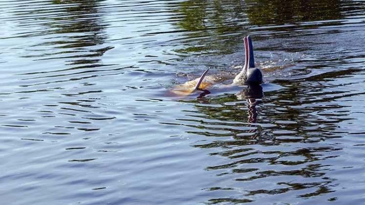 10 Delfini rosa (3) a