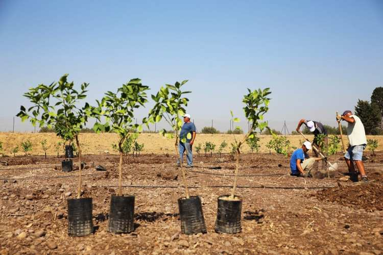 Treedom piantagione