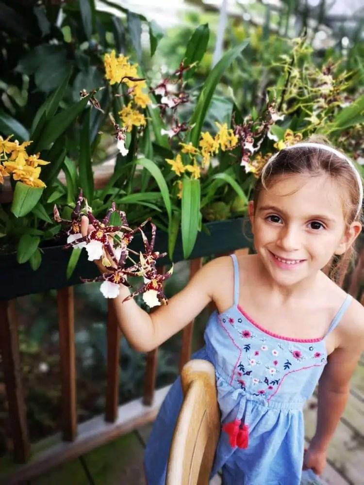 orchidee di Gargazzone