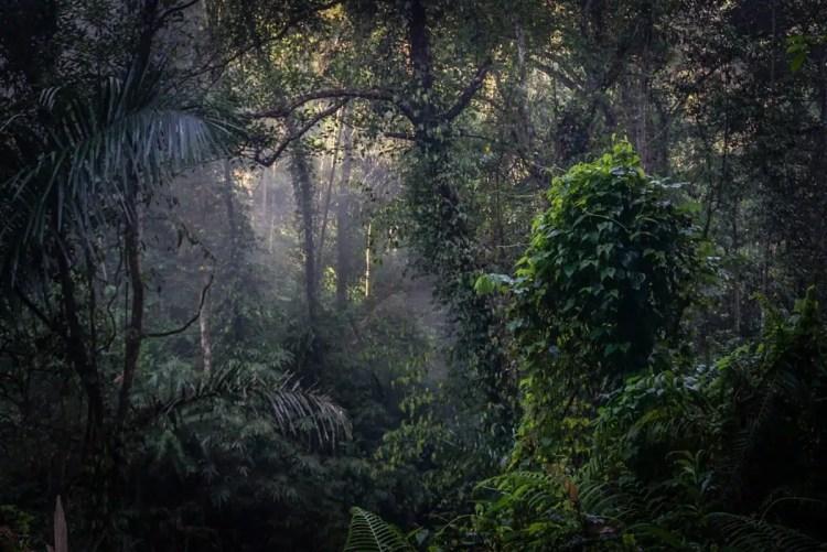 bali foresta