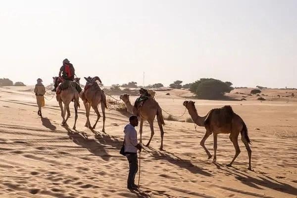 Chinguetti e i cammelli