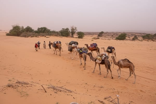 cammelli in mauritania