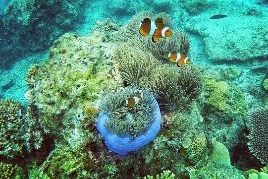 snorkeling isole Cham Islands Vietnam
