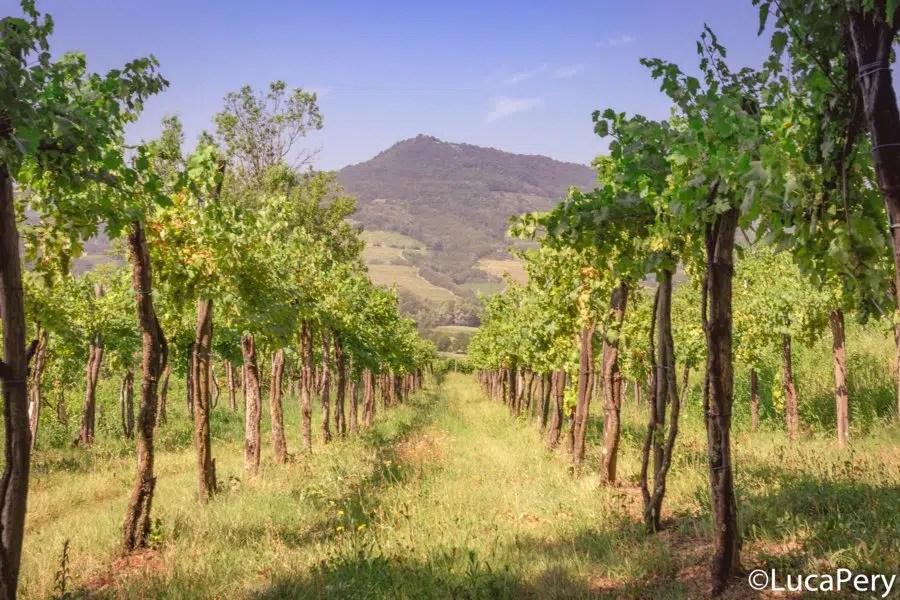 Valle di Vipava